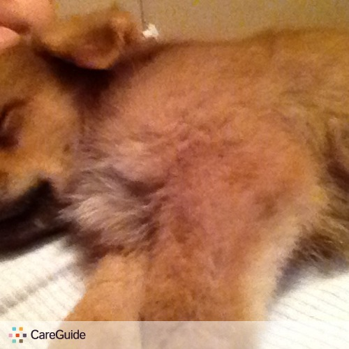 Pet Care Provider stephania martinez's Profile Picture