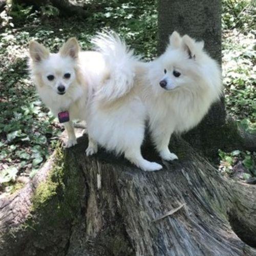 Pet Care Provider Sami J's Profile Picture