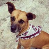 Brandon Dog Walker/Pet Sitter and Lover!