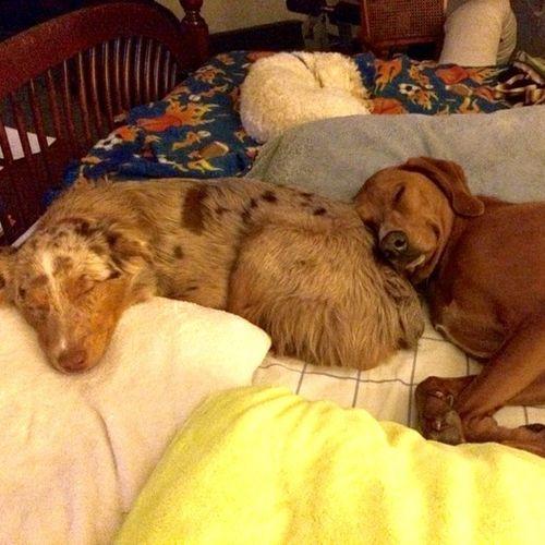 Pet Care Job Devon Conner's Profile Picture