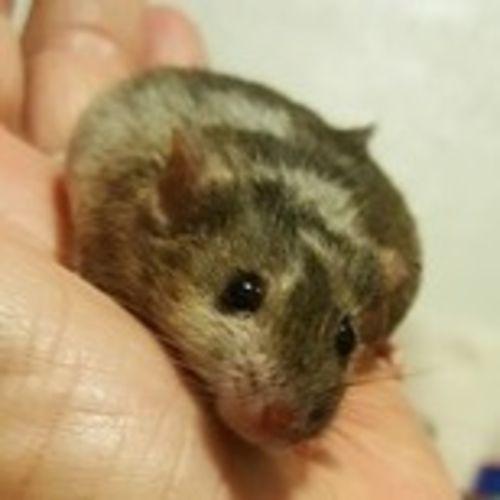 Pet Care Provider Sophia Reimer Gallery Image 3