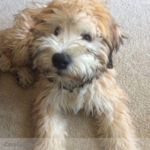 Pet Care Job Elizabeth J's Profile Picture
