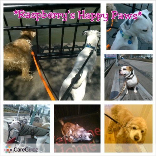 Pet Care Provider Virmary Baez's Profile Picture