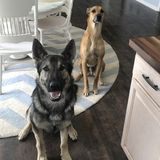 For Hire: Dedicated Pet Sitter in Rockford