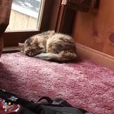 Pet Care Job in Taylorsville