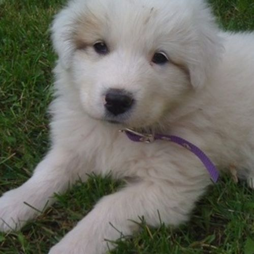 Pet Care Provider Kelly K's Profile Picture