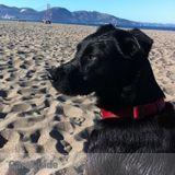 Pet Sitter Job in San Francisco