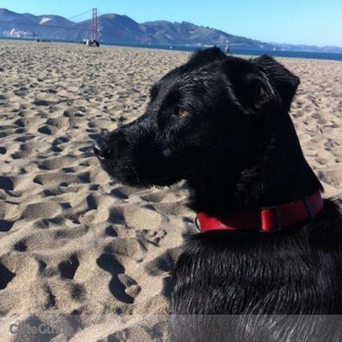 Pet Care Job Amanda Holstein's Profile Picture