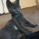 Hiring: Pet sitter, Toledo Area
