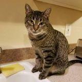 Pet Care Job in Tacoma