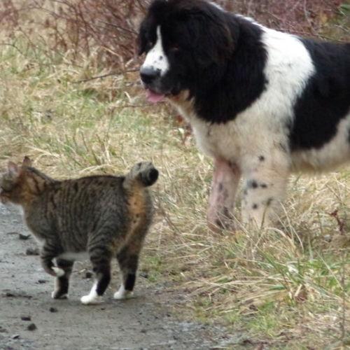 Pet Care Job Leslie Douda's Profile Picture