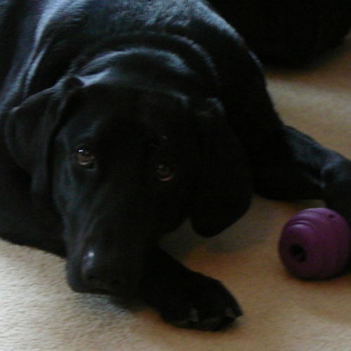 Pet Care Job Sharon Ellis's Profile Picture