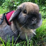 Loving Animal Enthusiast Looking to Help