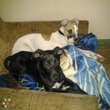 Dog Walker, Pet Sitter in Chicago