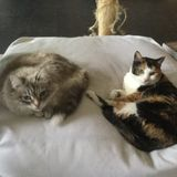 Looking for Trustworthy Cat Sitter in Richmond Hill