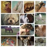 Dog Walker, Pet Sitter in Fort Myers