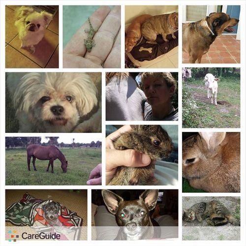 Pet Care Provider Sheena Anderson's Profile Picture