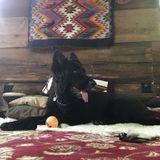In-home dog sitting w healing services