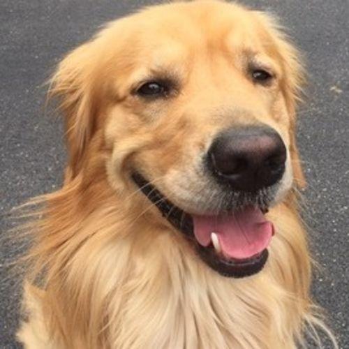 Pet Care Provider Jay J's Profile Picture