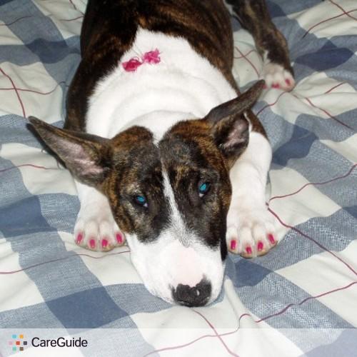 Pet Care Provider Cassie B's Profile Picture