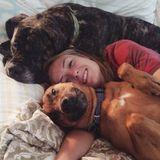 Brevard Pet Carer Seeking Job Opportunities in North Carolina