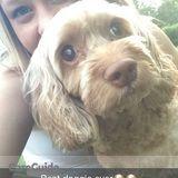 Dog Walker, Pet Sitter in Brainerd