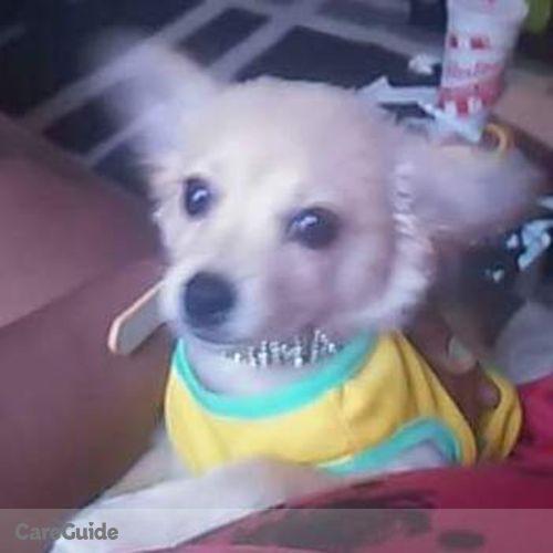 Pet Care Job Sara Lyons's Profile Picture