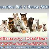 Dog Walker, Pet Sitter in Portsmouth