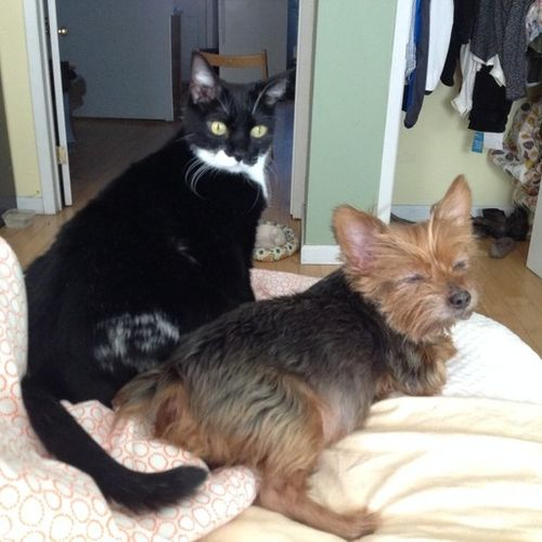 Pet Care Provider Belinda U Gallery Image 2