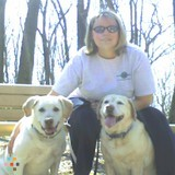 Dog Walker, Pet Sitter in Yorkville