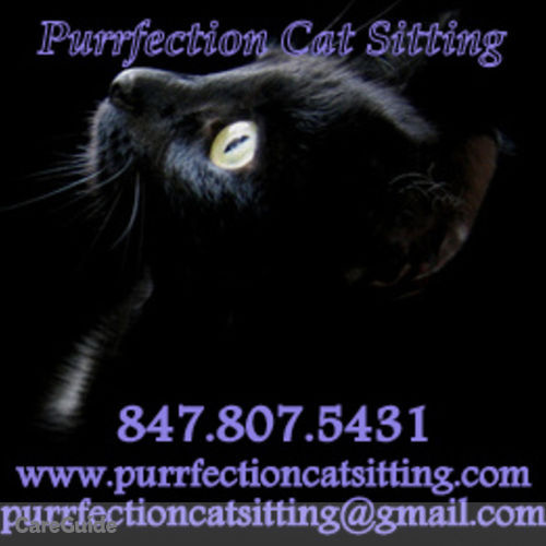 Pet Care Provider Purrfection Cat Sitting's Profile Picture