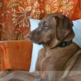 Pet Sitter in Rangeley