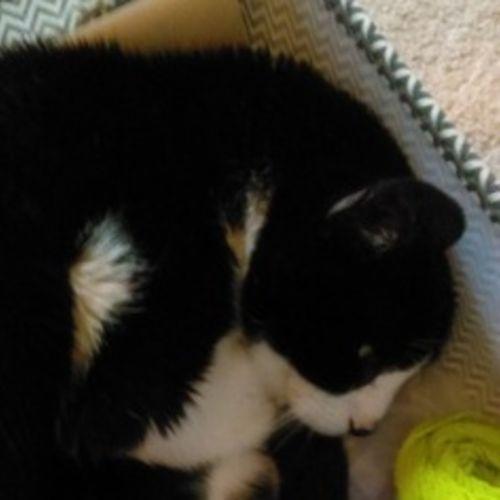 Pet Care Job Jodi Leuenberger's Profile Picture