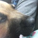Seasoned Dog Sitting Professional in Arnoldsville