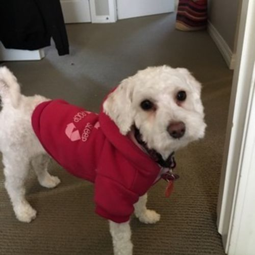 Pet Care Provider Eva Coyes Gallery Image 1