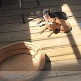 Dog Walker Job, Pet Sitter Job in Gatineau