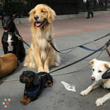 Dog Walker, Pet Sitter in San Mateo