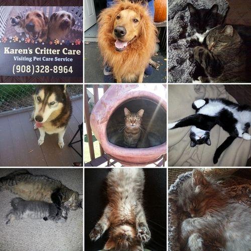 Pet Care Provider Karen S's Profile Picture