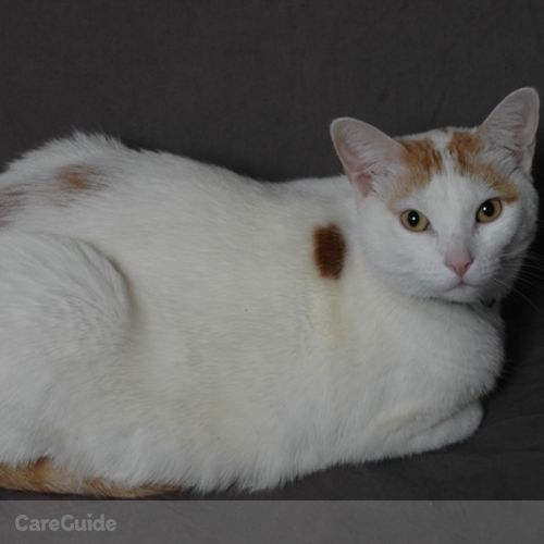 Pet Care Job My Cat Blessed's Profile Picture