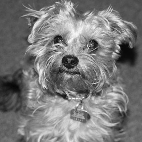 Pet Care Job Steve V's Profile Picture
