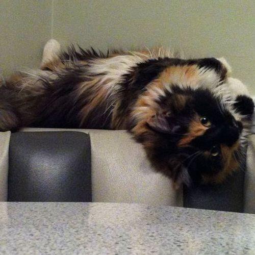 Pet Care Provider Kassie B Gallery Image 2