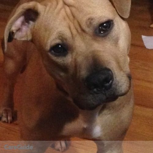 Pet Care Provider Sergio Martinez's Profile Picture