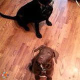 Dog Walker, Pet Sitter in Saint Clair
