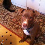 Dog Walker, Pet Sitter in Sunnyside