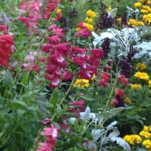 Gardener Provider Maureen R Gallery Image 2