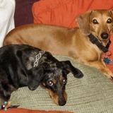 Dog Walker, Pet Sitter in Prescott