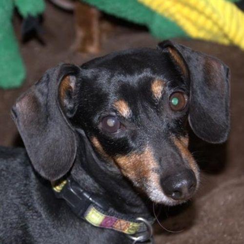 Pet Care Provider Lea J Smith Gallery Image 3
