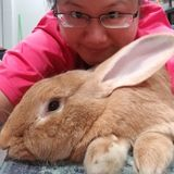 Love rabbits - will treat them like my own.
