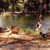 Dog Walker, Pet Sitter in Davie