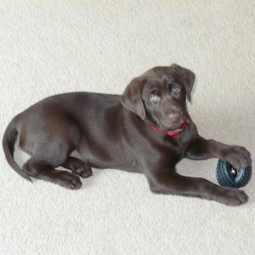 Pet Care Job Dana Blanchard's Profile Picture